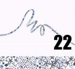 Cordon 22